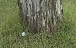木の根元のボール
